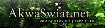 Akwarystyka - Forum akwarystyczne AkwaŚwiat
